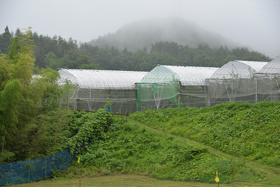 さくらんぼ農園