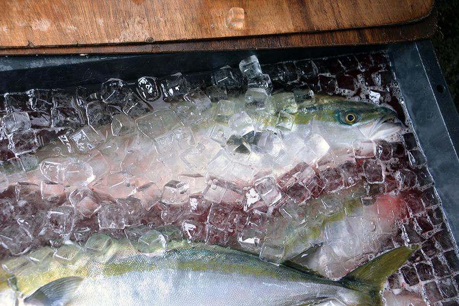 獲れたての味を食卓に届ける冷凍技術